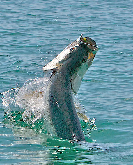 Jon Ziarnik's big Florida Keys Tarpon on Fly May 2009