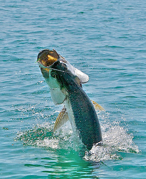 Florida Keys Tarpon on Fly, Jake Jordan Photo