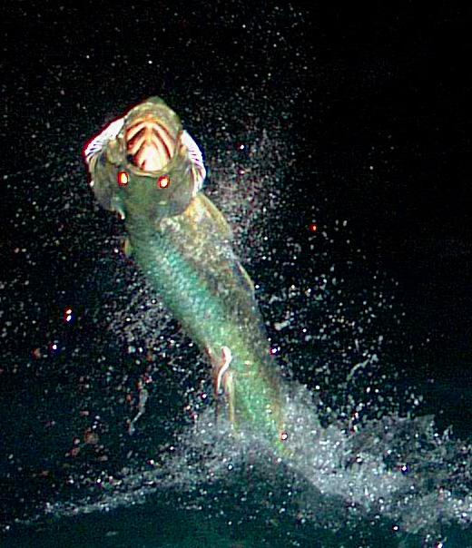 Florida Keys Night Time Tarpon on Fly 2011