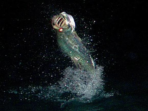 Florida Keys Night Tarpon on Fly, Captain Jake Jordan