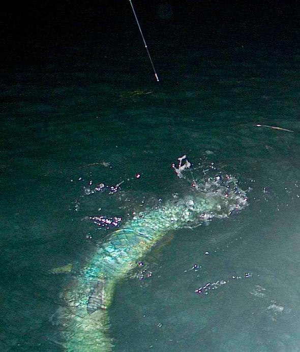 125 pound Tarpon on Fly, Jake Jordan photo, Florida Keys 2014