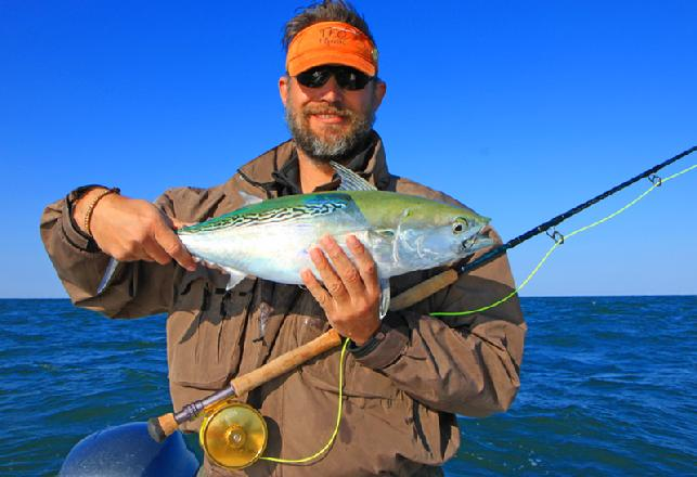 Chris Thompson releasing Albie on fly October 26 2014 aboard Fly Reel with Captain Jake Jordan