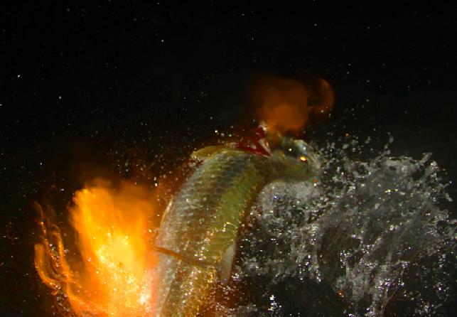 Dusty Byrd; Extreme Nighttime, Tarpon on Fly May 24, 2011, Florida Keys, Captain Jake Jordan, vessel Fly Reel