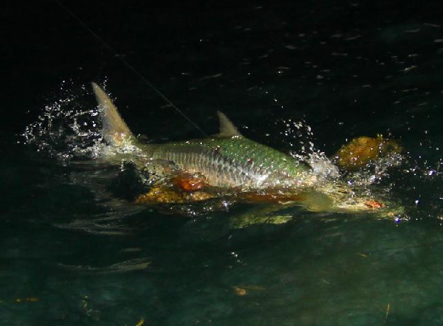 Chuck Furimsky Big Tarpon on Fly, Vessel Fly Reel, Captain Jake Jordan, May 14, 2012