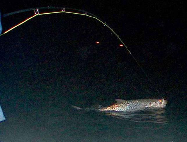 Gerrry Wendrovsky, Night Tarpon on Fly, May 16, 2011, Captain Jake Jordan