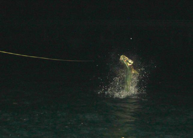 LC's Jumping Night Tarpon on Fly, Captain Jake Jordan