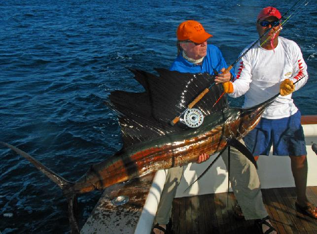 Casa Vieja Lodge Sailfish on Fly Rum Line Jan 2011