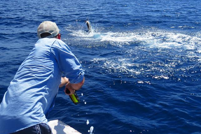 Mark Ronald fighting first Blue Marlin on fly ever, Dragin Fly, August 2016