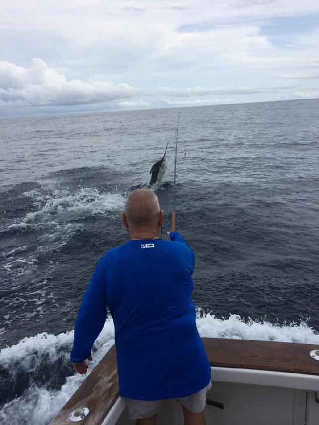 "Blue Marlin on Fly, Blue Marlin Fly Fishing School, Los Suenos CR, ""Dragin Fly"""