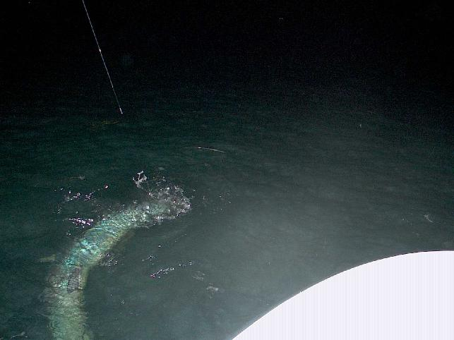 Nikki Wells, Giant Night Tarpon on Fly, May 2009