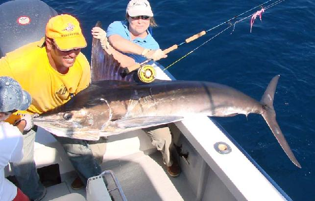 Galapagos Striped Marlin on Mako Fly Reel by Jack Charlton